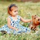 Маленький йорк всю ночь согревал девочку, которая потерялась в поле