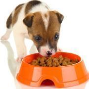 Как выбирать корм для щенков?