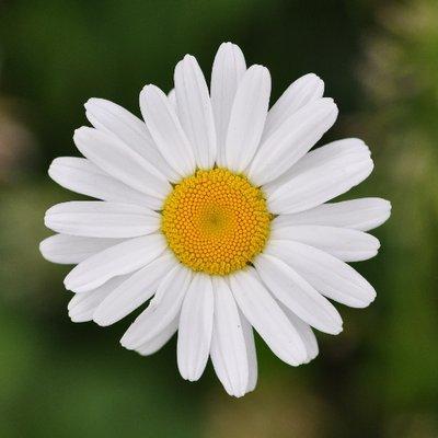 Почему срезанные цветы лучшие?