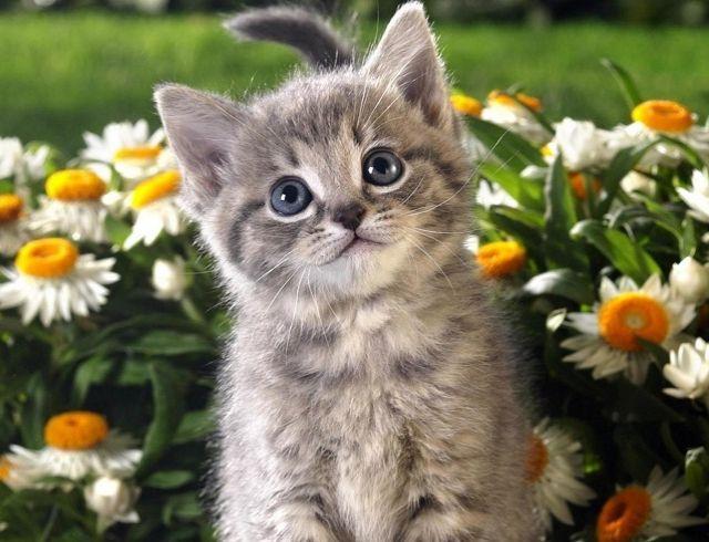 В Китае успешно клонировали котенка: питомца назвали Чесночок