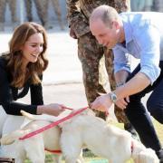Герцоги Кембриджские приняли участие в дрессировке собак в кинологическом центре