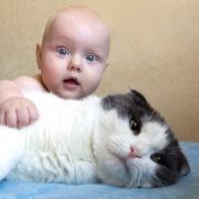 Кошка спасла младенца и попала на видео