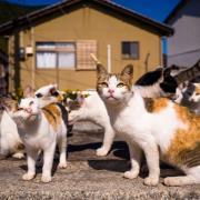 Хозяйка 40 кошек не справилась с ними и попала под суд