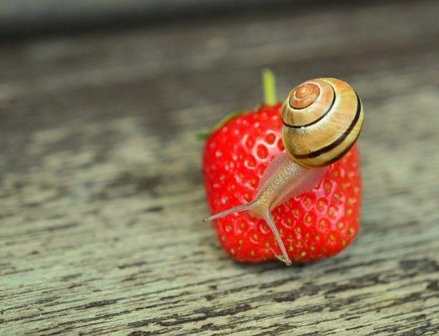 3 лайфхака: как правильно выбирать клубнику?